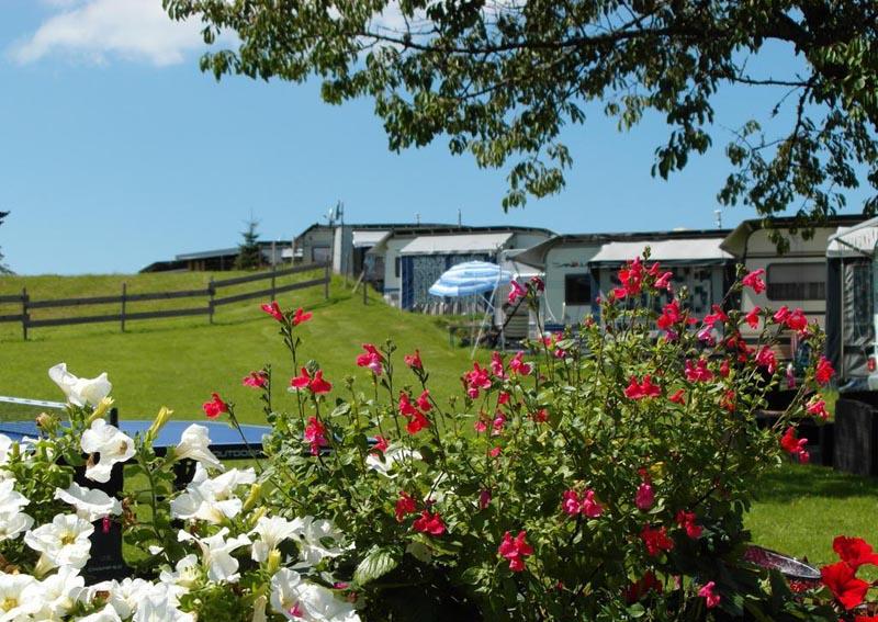 Blumige Aussicht vom Campingplatz in Vorarlberg
