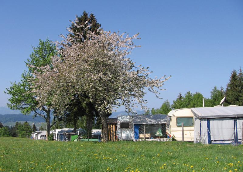 Frühling erreicht den Ganzjahrescampingplatz Hochlitten in Vorarlberg